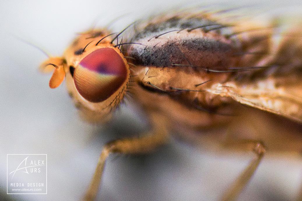 Fly Macro