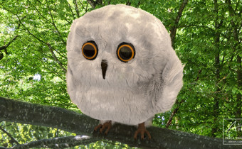 Baby-Owl in the Woods